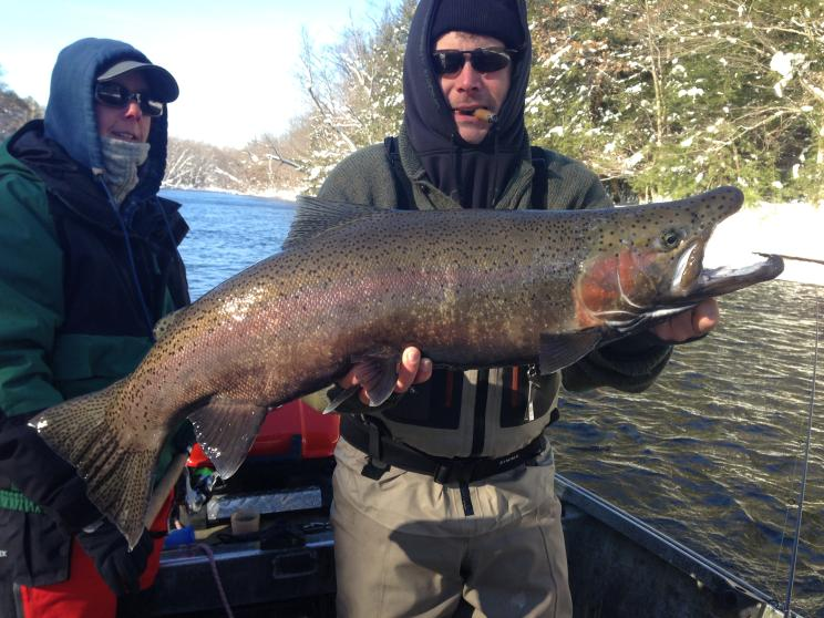 Slideshows of salmon steelhead walleye and brown trout for Salmon fishing in ny